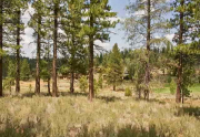 lahontan-meadow-view-lot